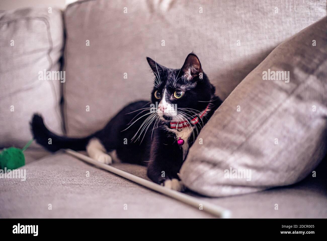 Gato negro en el sofá Foto de stock