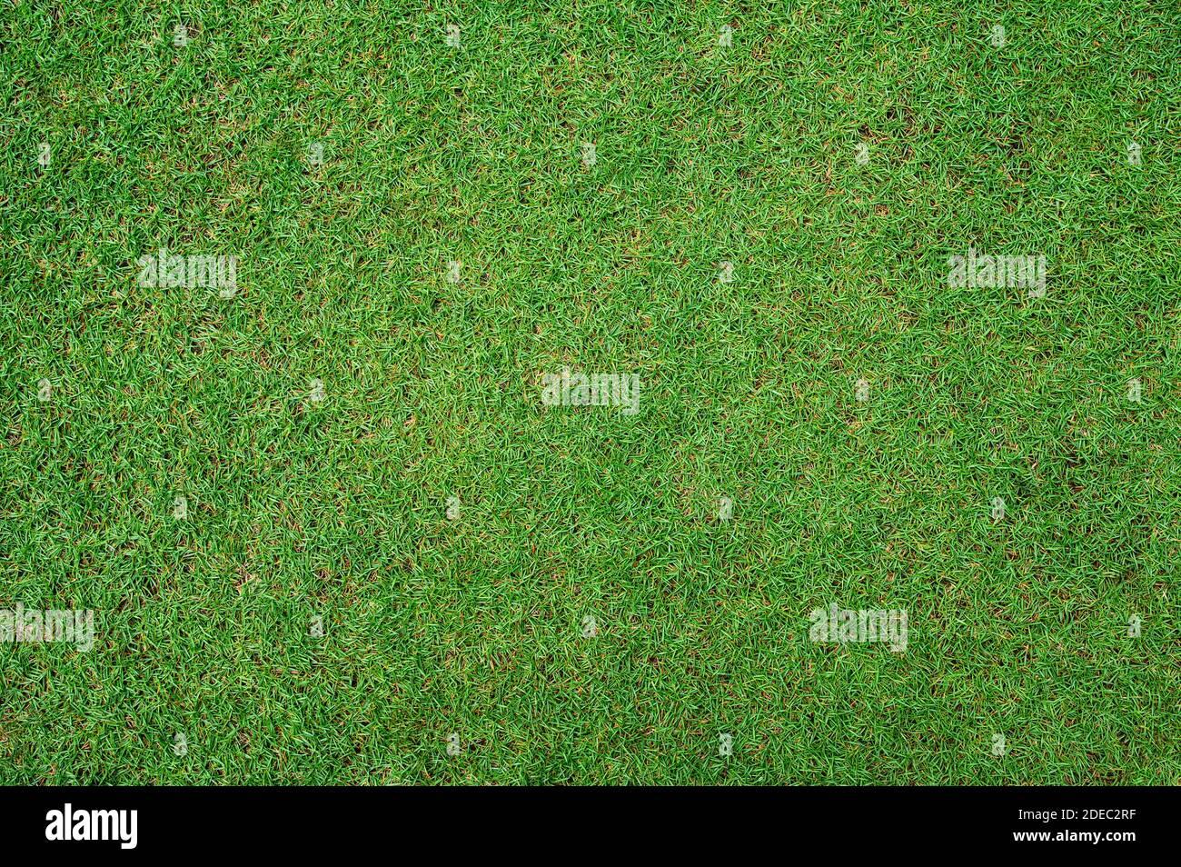 Verde hierba textura fondo Vista superior de jardín de césped brillante, césped para el entrenamiento campo de fútbol, césped Campos de Golf césped verde patrón de césped textura bac Foto de stock