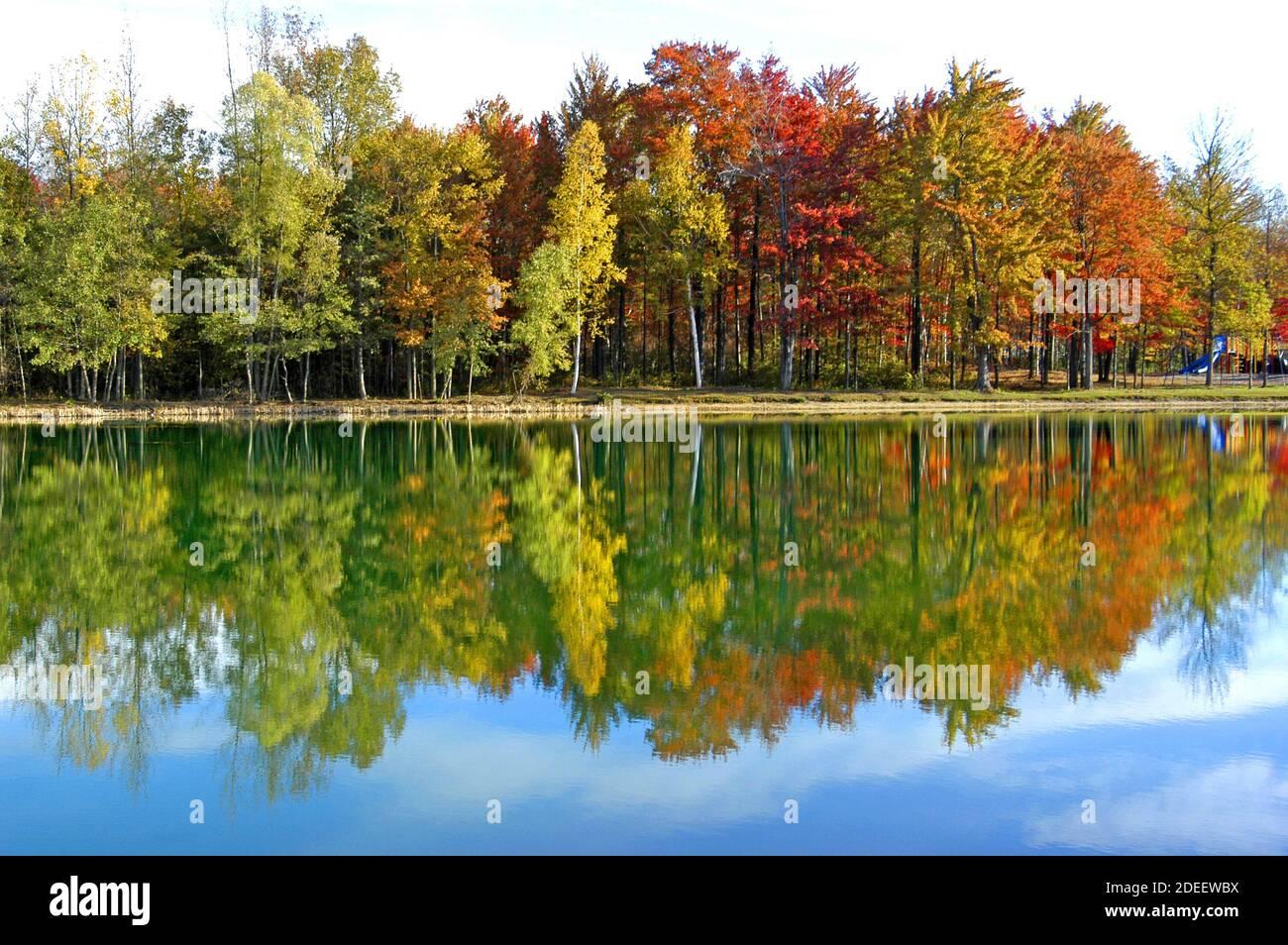 Hermosos Arce Rojo, Abedul Blanco y Arce Dorado en sus colores de otoño en el sudeste de Michigan, CERCA de Detroit Foto de stock