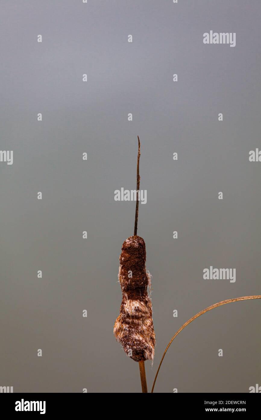 Cabeza de cola de pico en la fase de descomposición contra un fondo de agua En Steveston, Canadá Foto de stock