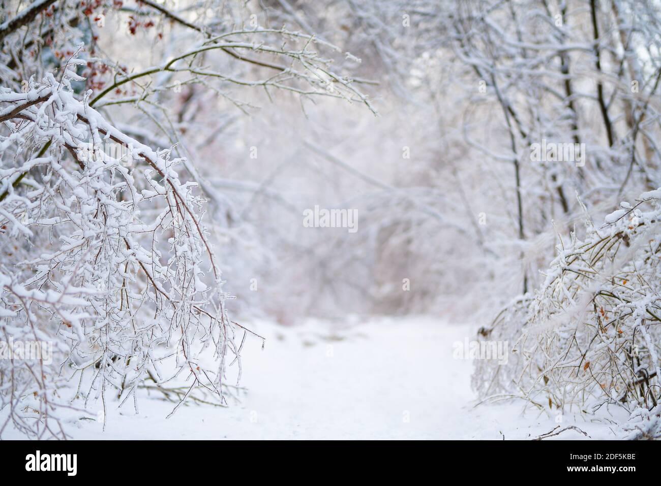 Hermoso bosque de invierno después de la primera nieve pesada Foto de stock