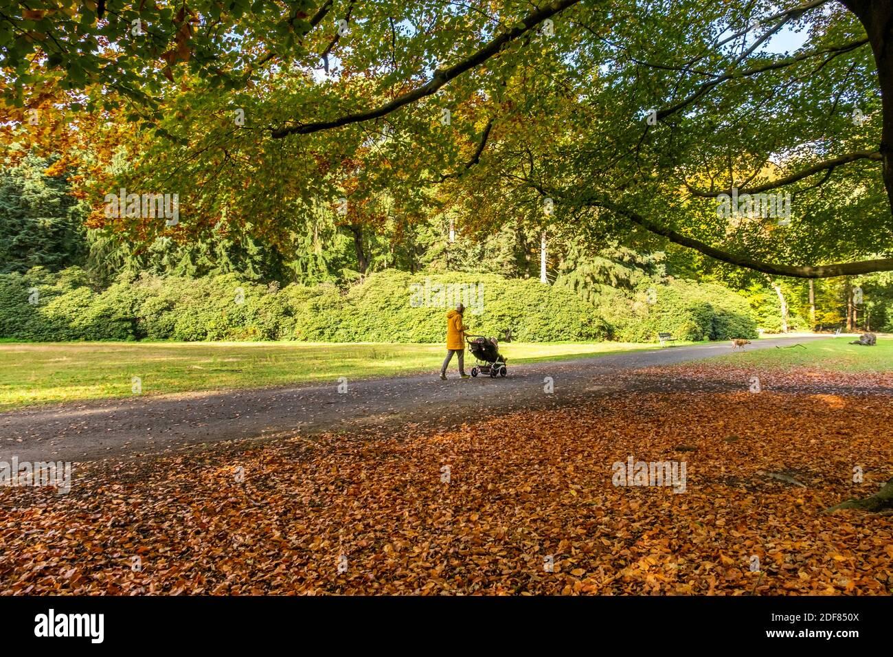 Mujer con buggy caminando a su perro en un colorido bosque otoñal en los países Bajos, Europa. Foto de stock