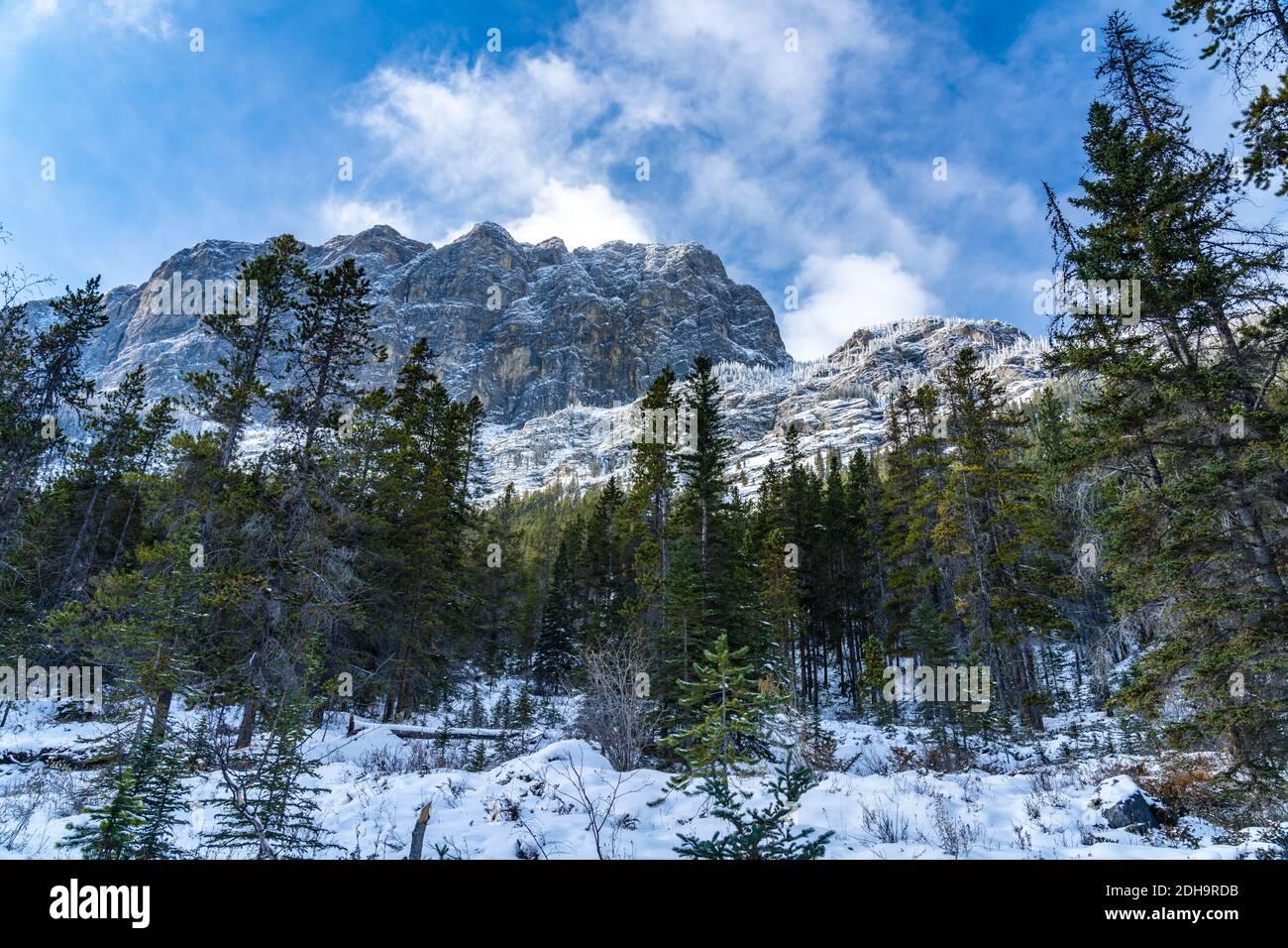 Paisaje forestal a principios de invierno, pinos verdes en el primer plano, montañas cubiertas de nieve con árboles congelados en el fondo. Paisaje en Grassi Lagos T Foto de stock