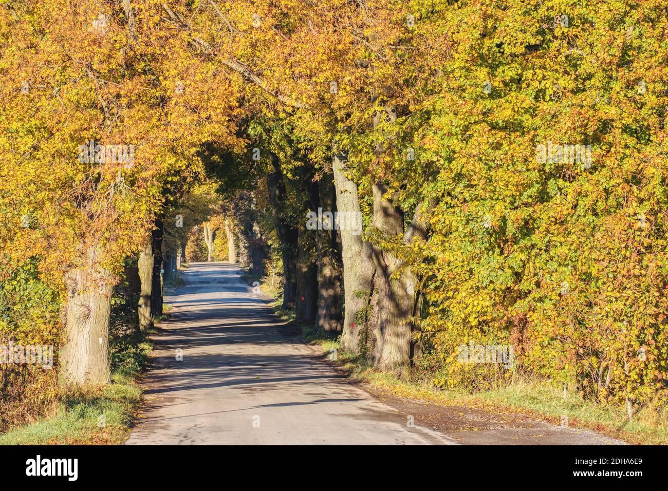 Caída de árboles de color en el callejón en otoño Foto de stock