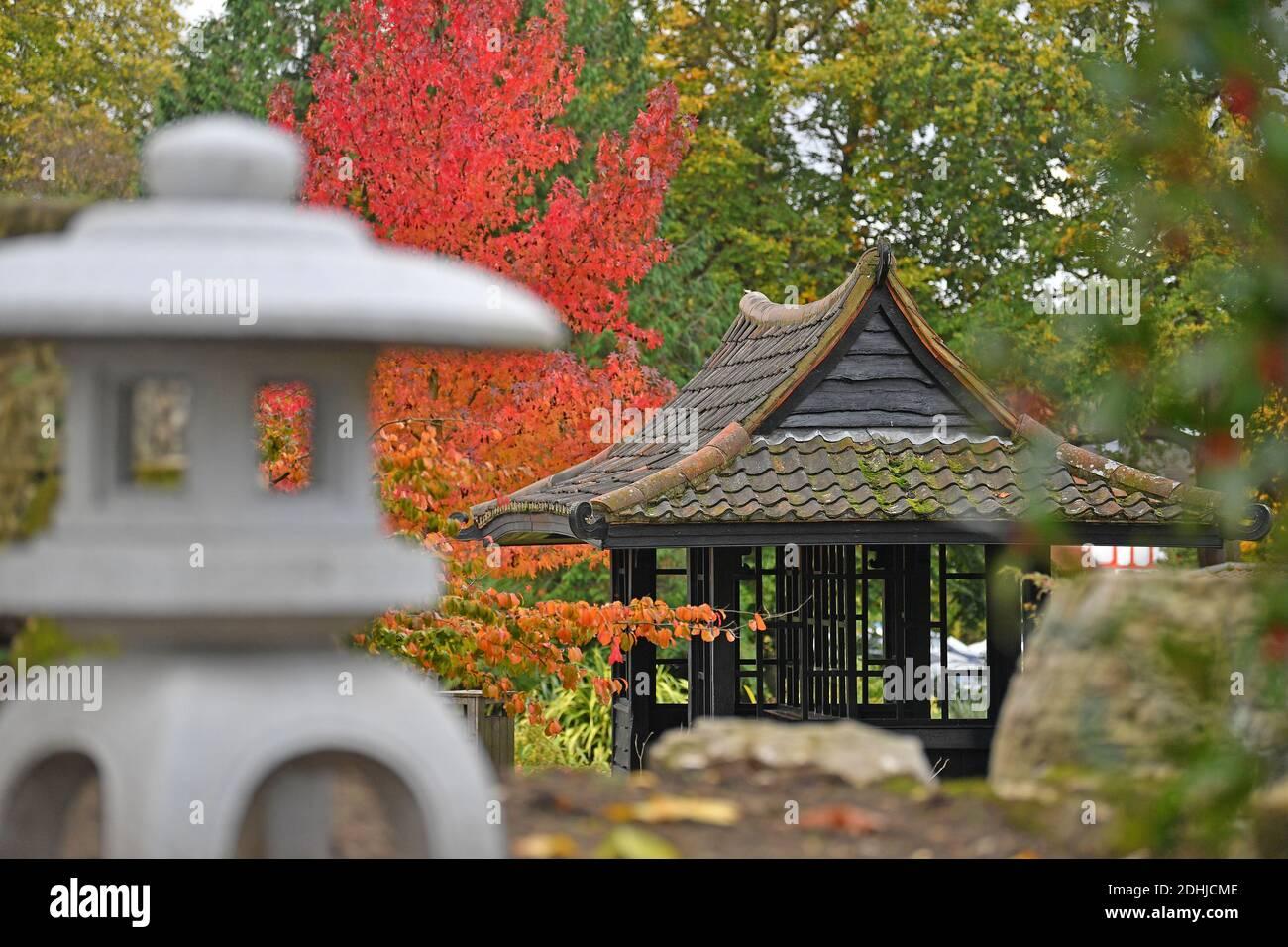 Aparecen en Stoke Park, Guildford - colores otoñales, ya que las obras continúan restaurando y mejorando los jardines orientales. Guildford, Surrey. Foto tomada el 20 de octubre de 2020 Foto de stock