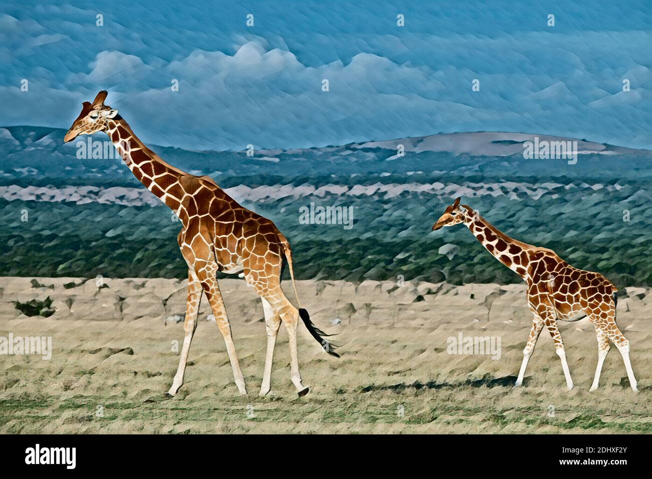 África, Kenia, jirafas reticuladas (SALVAJE: Giraffa camelopardalis reticulata) mejorado por computadora. Foto de stock