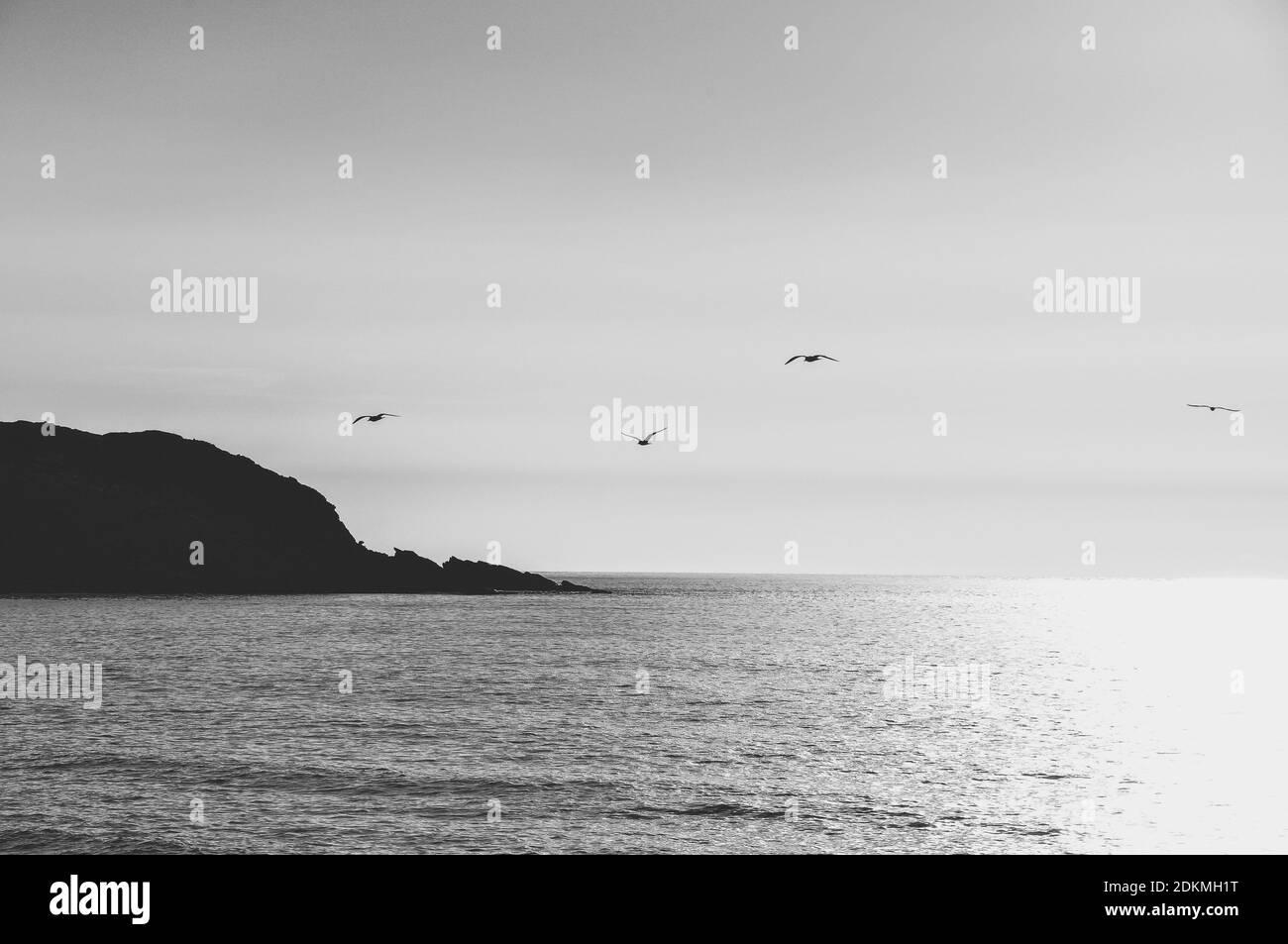 Pájaros volando sobre el mar contra el cielo Foto de stock