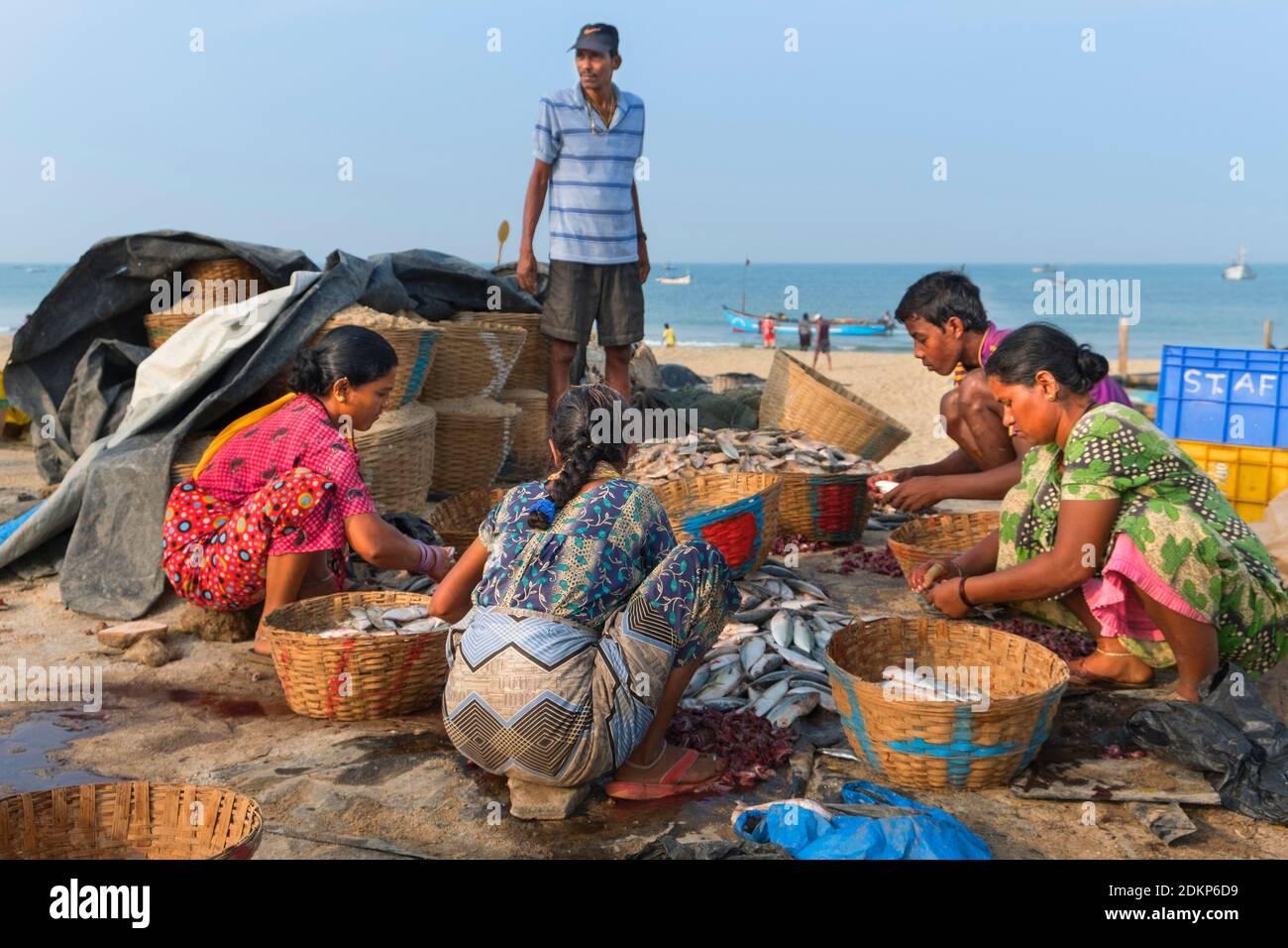 Clasificando pescado playa Colva Goa, India Foto de stock