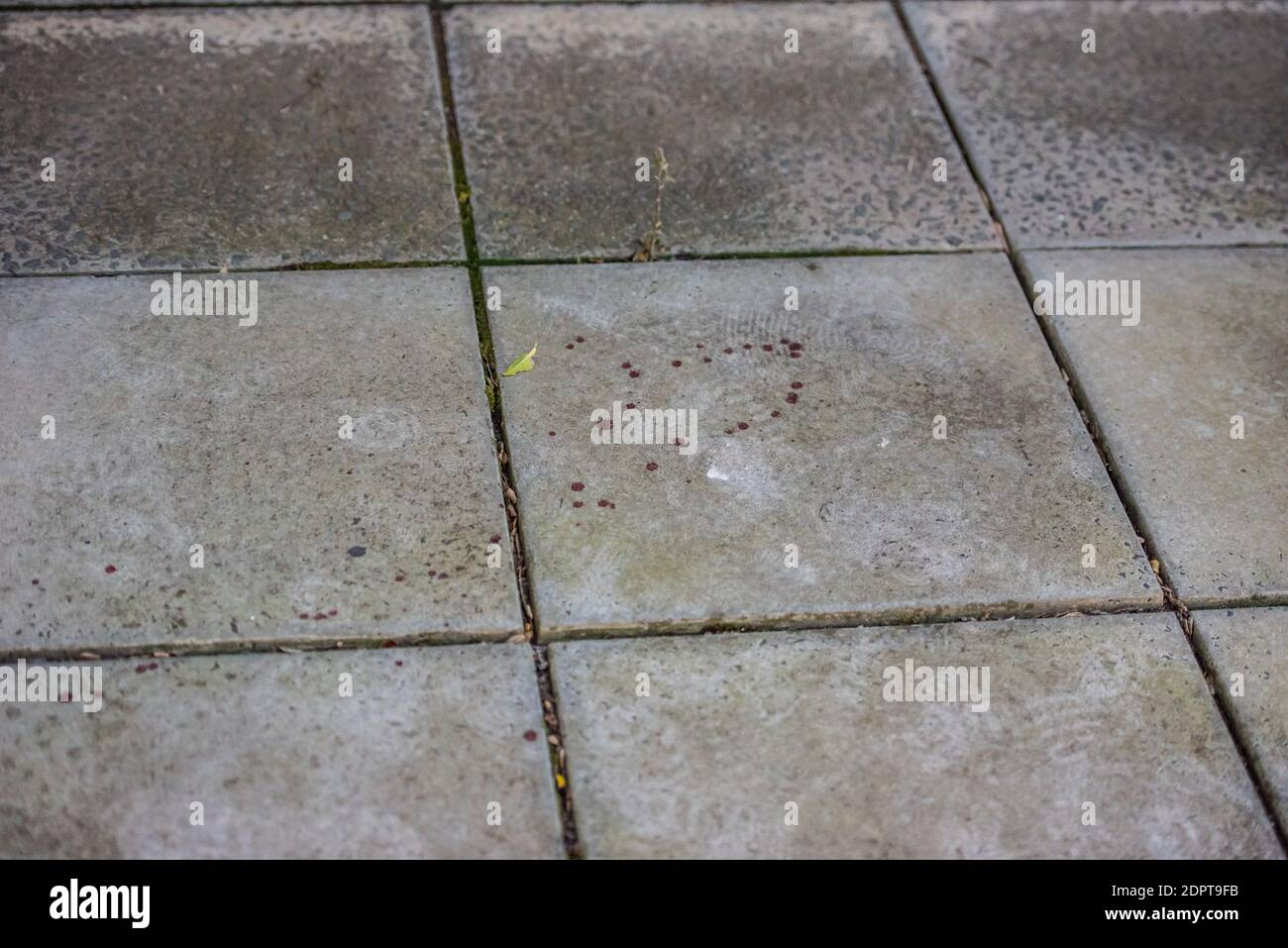 """Melbourne, Australia. 19 de diciembre de 2020. Quedan marcas de sangre en la carretera de ladrillo en un callejón cerca del famoso lugar nocturno.SE encontró A un hombre con graves lesiones en las manos y después de una investigación policial se encontró que era un """"incidente médico"""" donde las lesiones eran informes de la policía autoinfligidos. Crédito: SOPA Images Limited/Alamy Live News Foto de stock"""