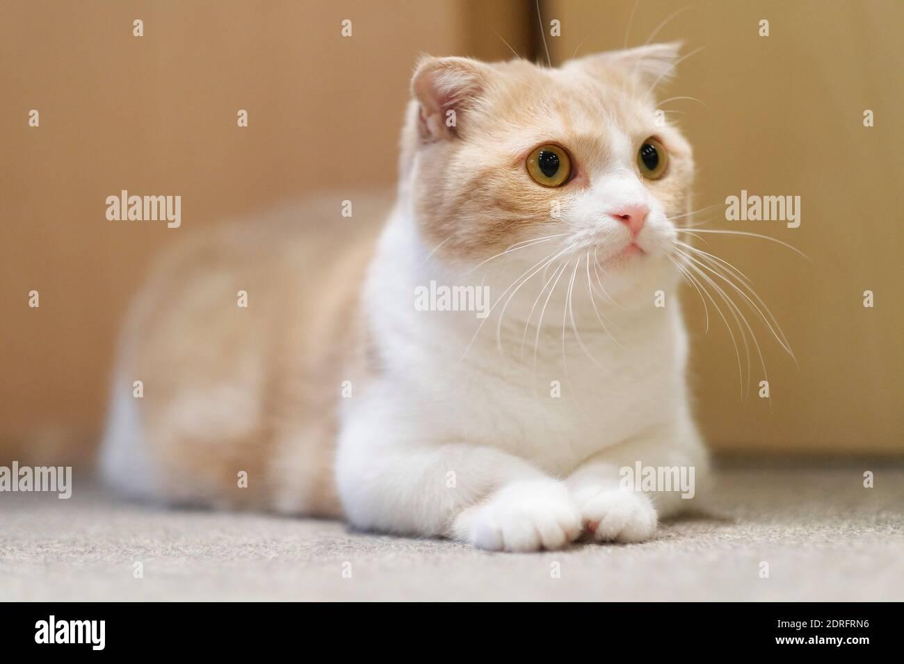Close-up de Cat Buscando por Casa Foto de stock