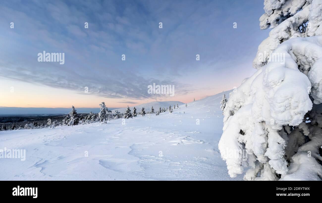 Paisaje de invierno medio en el Parque Nacional Pallas Yllas de la Laponia finlandesa. Mientras que el sol no se eleva, por pocas horas la luz es hermosa. Foto de stock