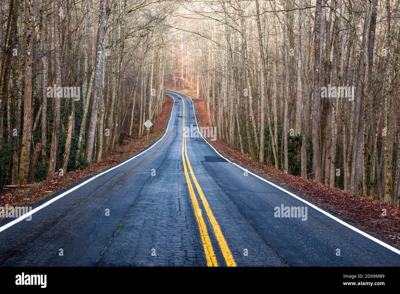Carretera a través del bosque - cerca de Poinsett Bridge Heritage Preserve - Travelers Rest, Carolina del Sur, EE.UU Foto de stock