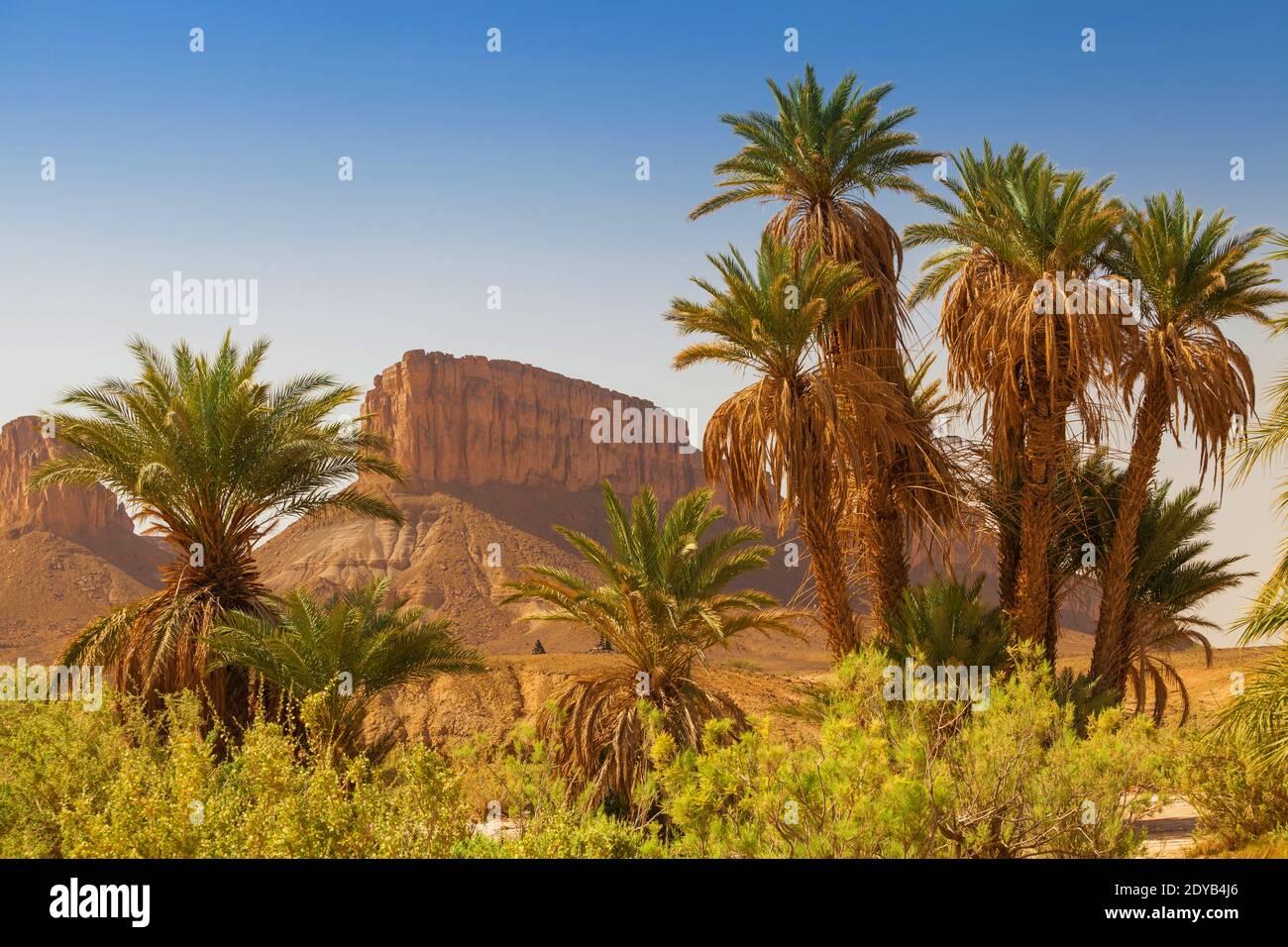Montañas en el desierto del Sáhara visto desde un oasis con palmeras. Marruecos África Foto de stock