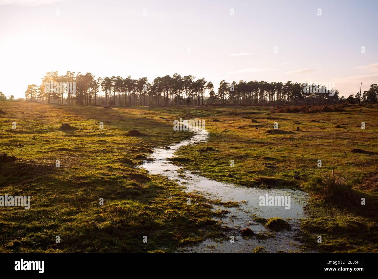 La nueva zona de conservación de bosques de Inglaterra de humedales y Mires. Esto es parte de la restauración del hábitat alrededor del Nuevo Bosque. Foto de stock