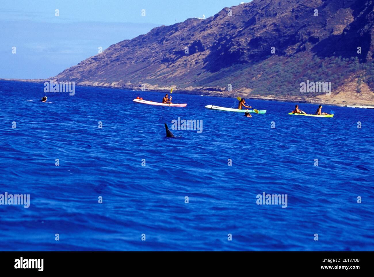 People dolphin watching by boat and kayak off Makua beach, Oahu, Hawaii Foto de stock