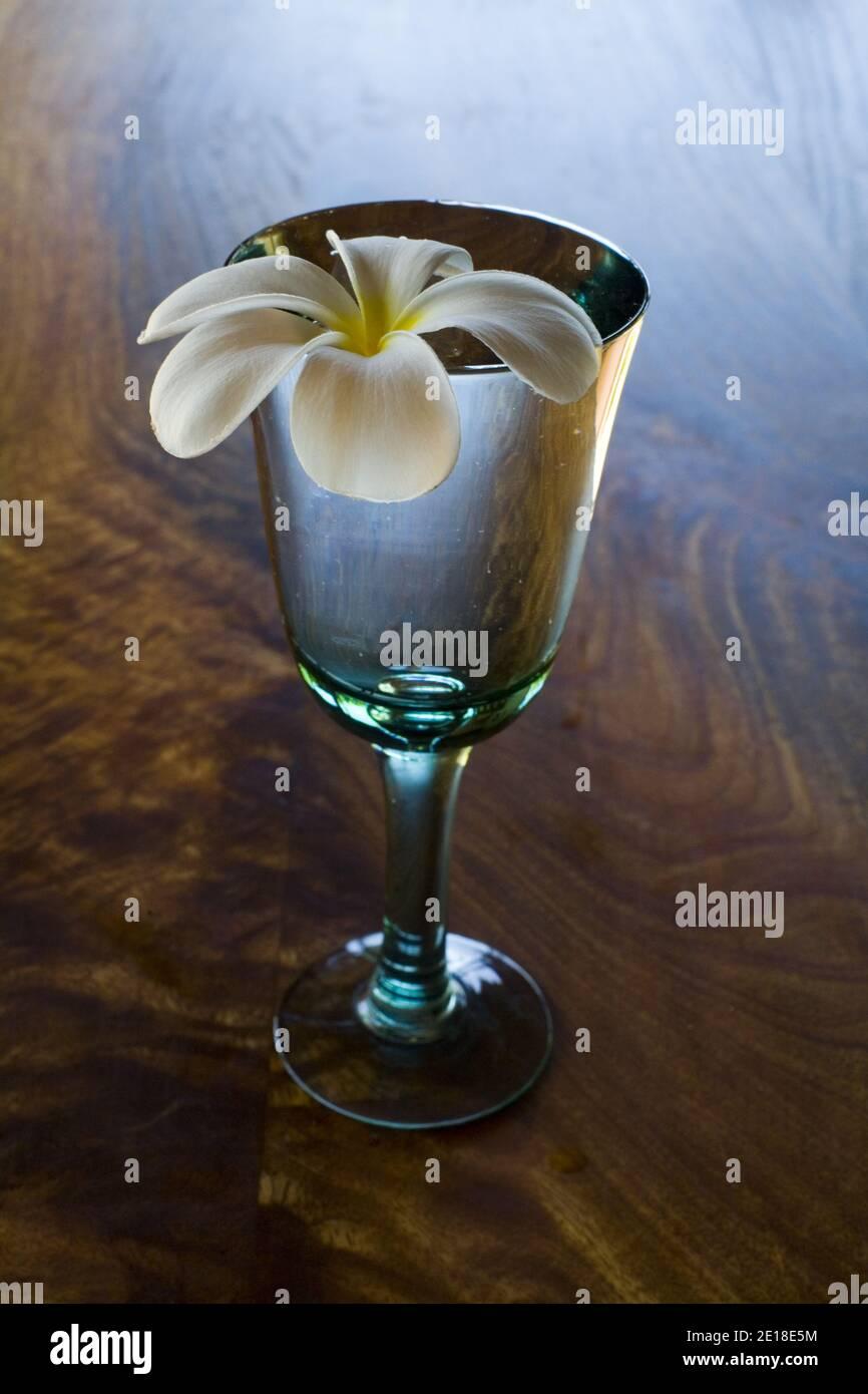 Plumeria flores sobre mesa de madera de mango. Plumeria, o ''frangipani'' es una flor aromática profundamente ligada a Hawai y su cultura. Foto de stock