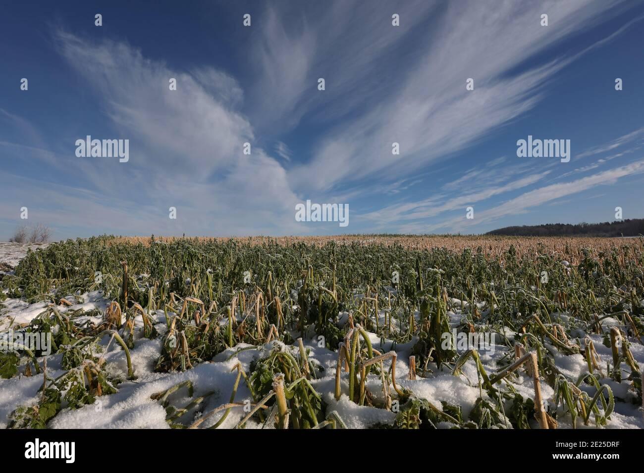 Paisaje invernal con campos nevados y cielo azul. Foto de stock