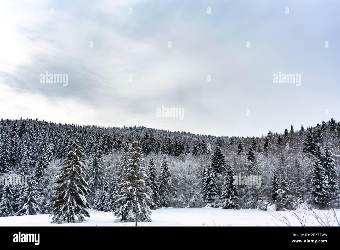Bosques cubiertos de nieve en Altopiano di Asiago - Italia Foto de stock