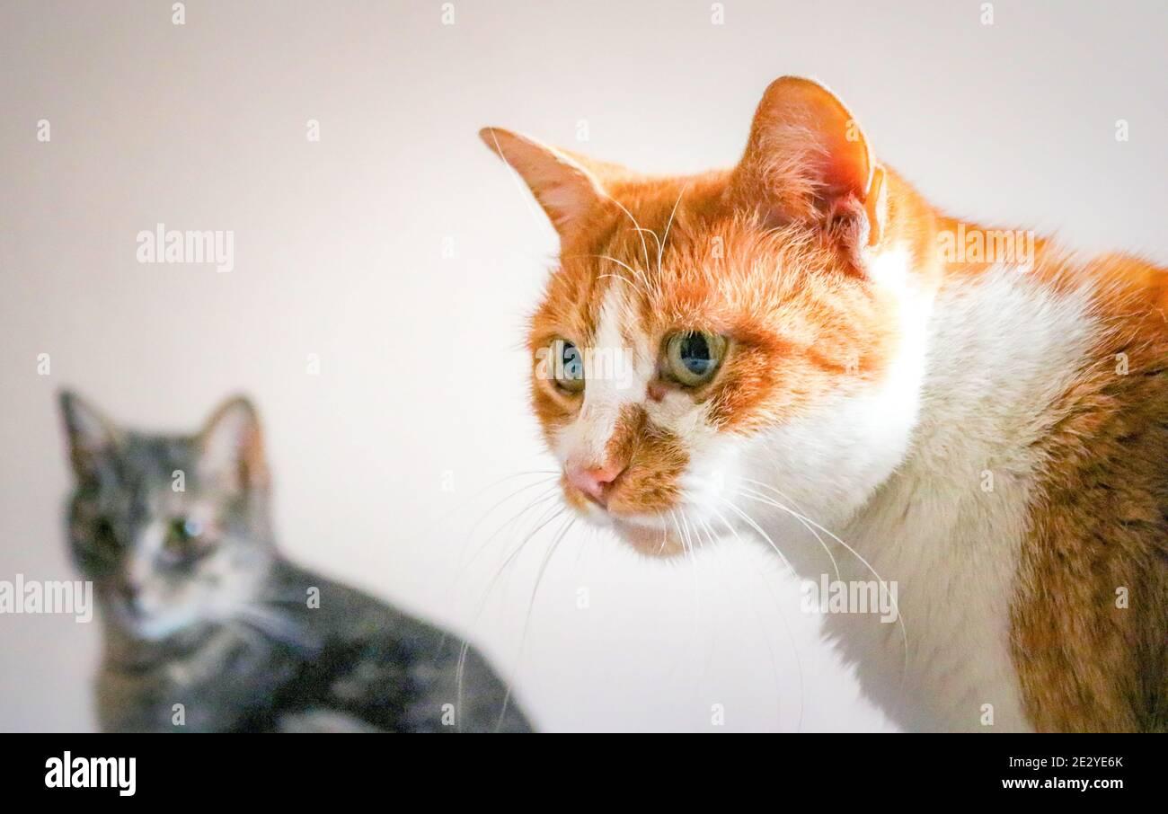 Un retrato de dos gatos Foto de stock