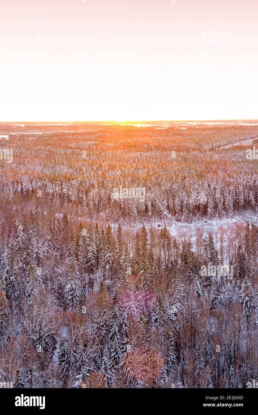 Vista del bosque de invierno cubierto de nieve desde el drone durante el amanecer Foto de stock