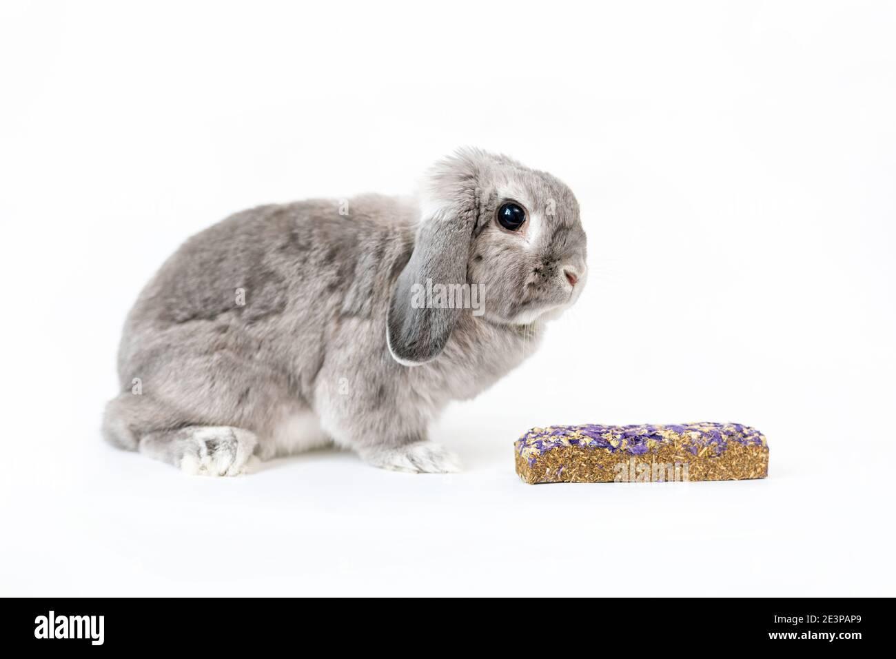 Un pequeño conejo gris decorativo de lop-eared con un pellet cerca. Fondo blanco. El concepto de cuidar a las mascotas. Foto de stock