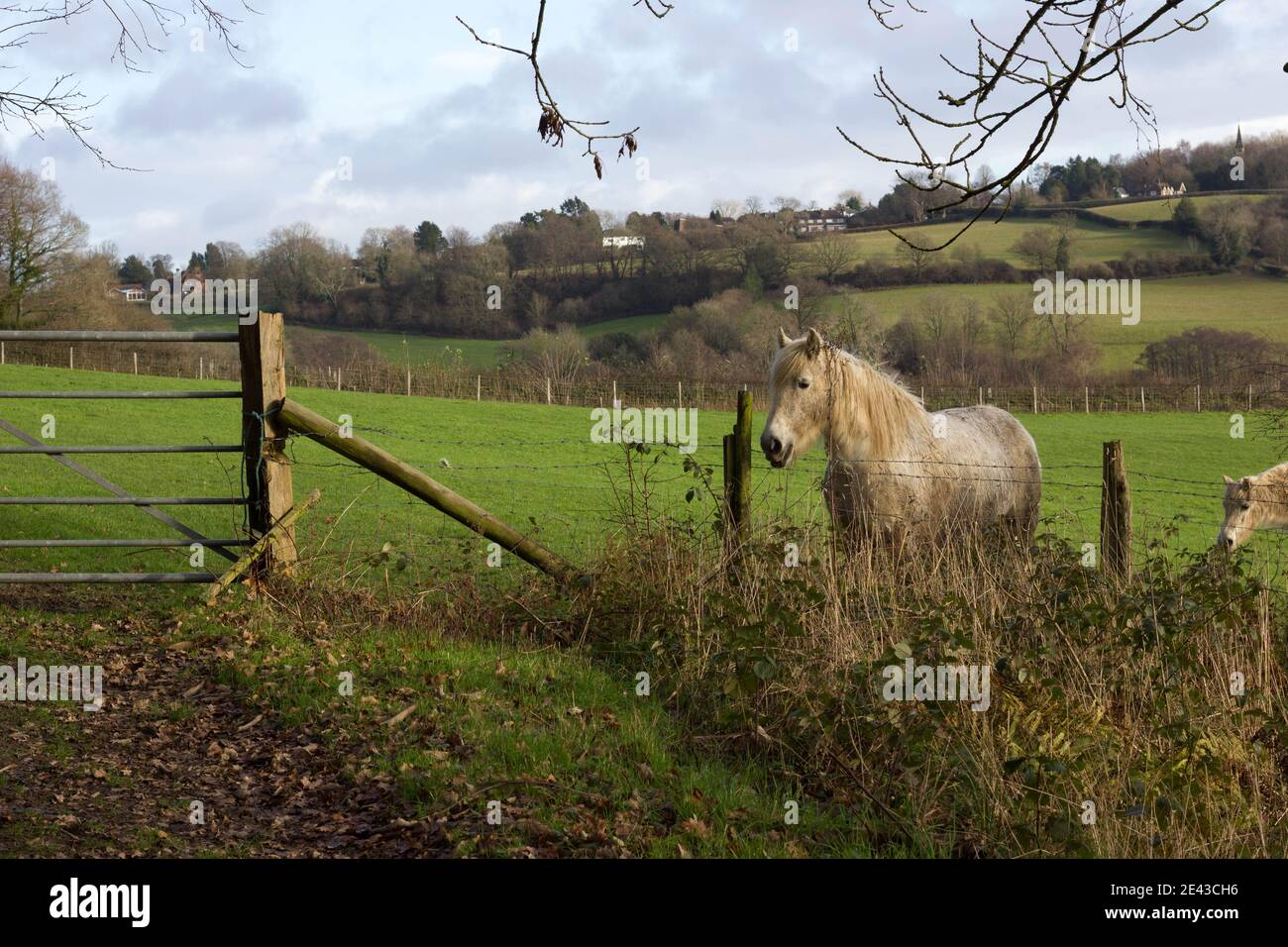 caballo pastando en la tierra de la granja en el día de invierno mirando hacia fuera detrás de la valla cableada Foto de stock