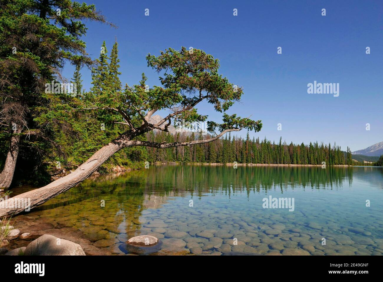 Lago Beauvert cerca de Jasper, Parque Nacional Jasper, Montañas Rocosas, Alberta, Canadá Foto de stock