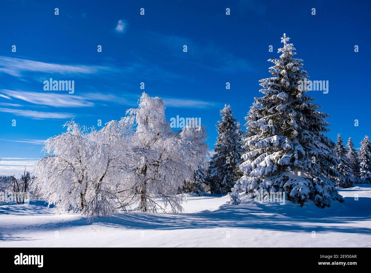 Paisaje invernal con árboles, hierros y nieve en un día soleado en las montañas de Ore. Foto de stock