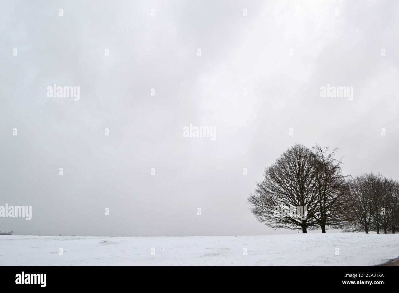 Una sombría escena en medio de la nieve en Knole Park, Sevenoaks, Kent, Inglaterra, 7 de febrero, 2021. Condiciones duras en el campo inglés Foto de stock
