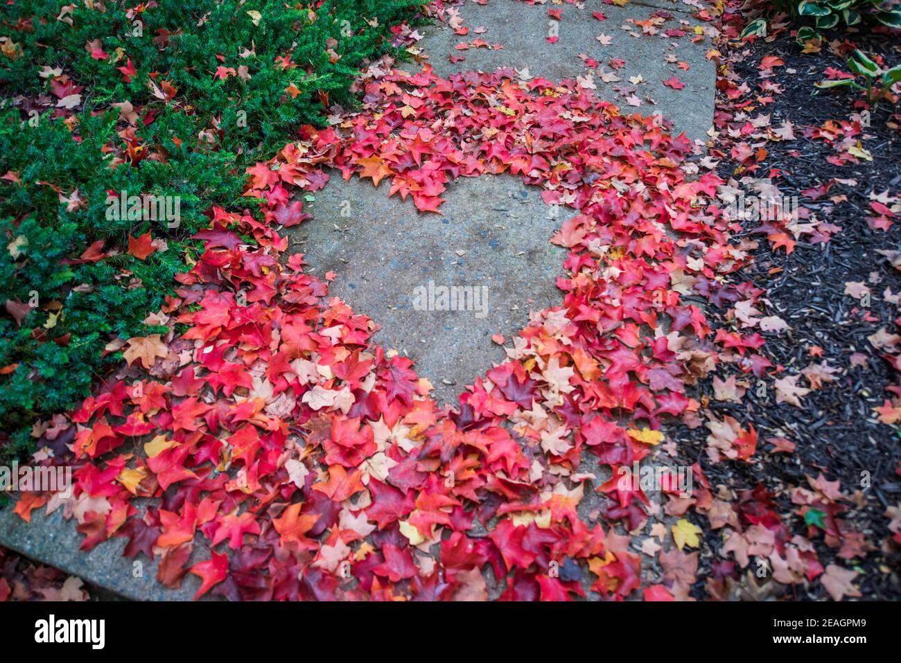 Forma del corazón creada a partir de hojas de arce de otoño rojas y naranjas. Superficie asfáltica en el medio. Lugar vacío para texto positivo, cita o dichos. Vista superior. Foto de stock