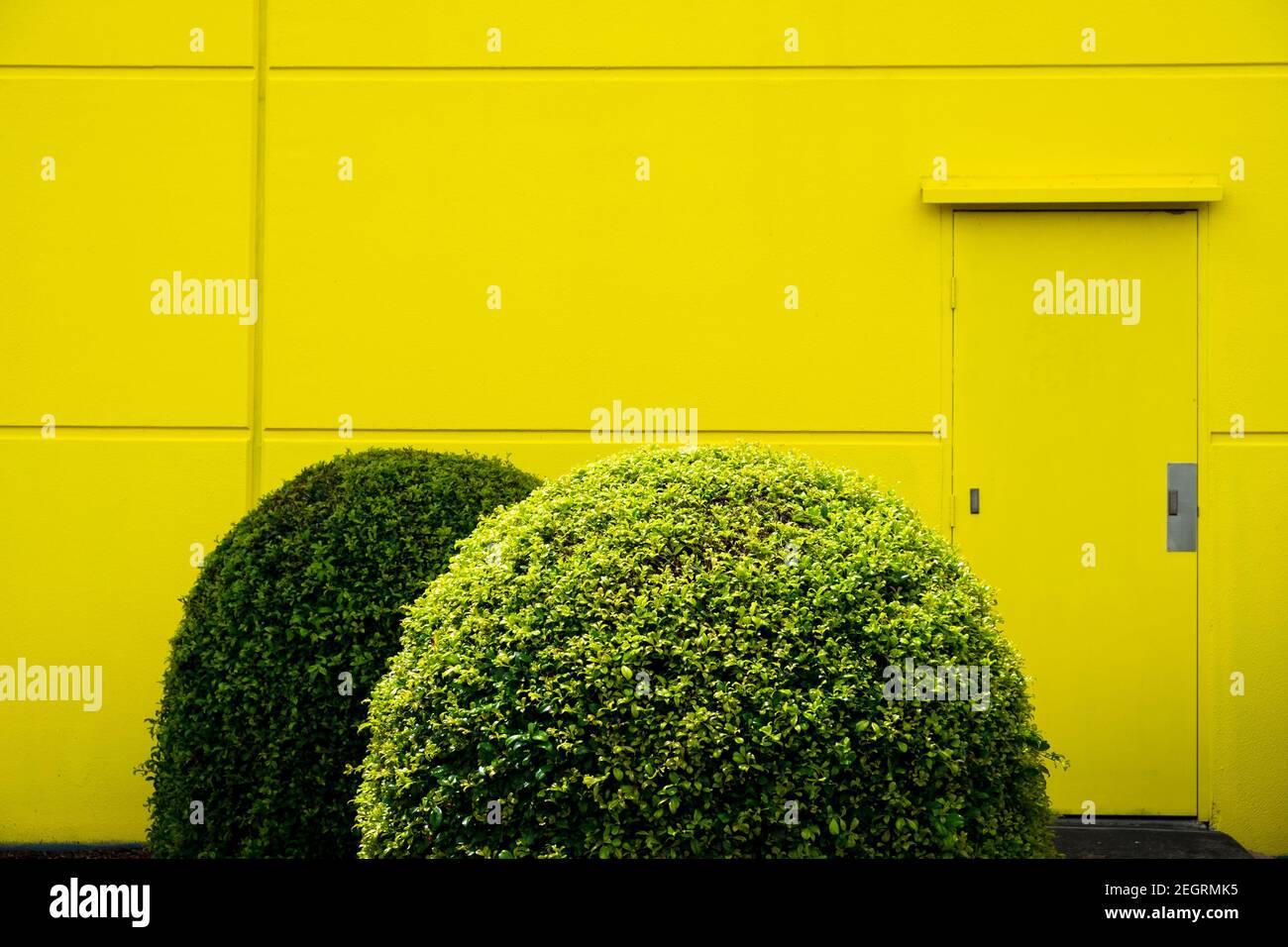 Fotografiados son plantas bien cuidadas contra una pared amarilla en los suburbios del norte de Brisbane, Australia. Foto de stock