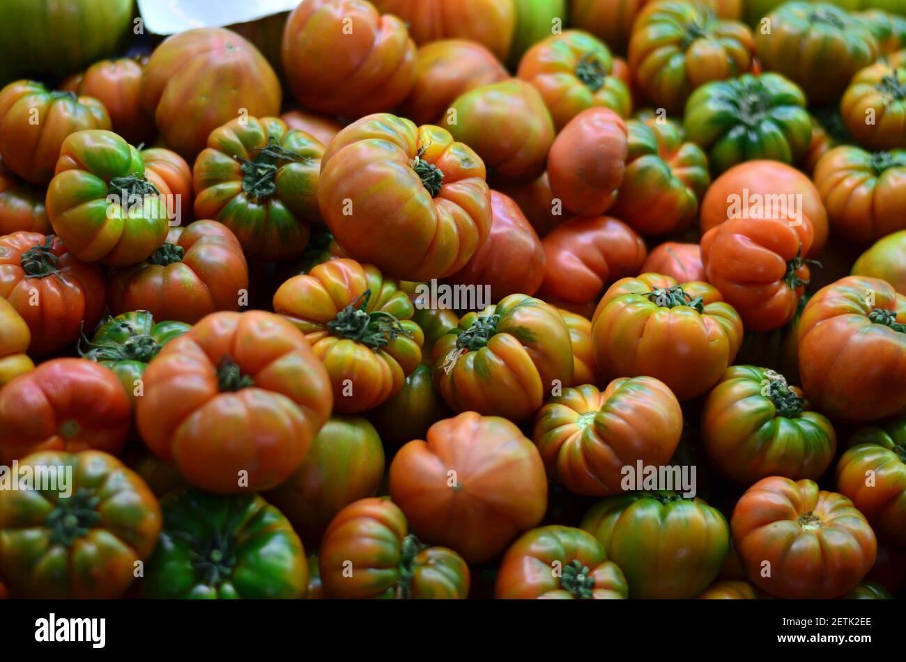 Tomates rojos y verdes frescos, recién cosechados en el jardín, listos para la venta en el mercado de verduras. Foto de stock