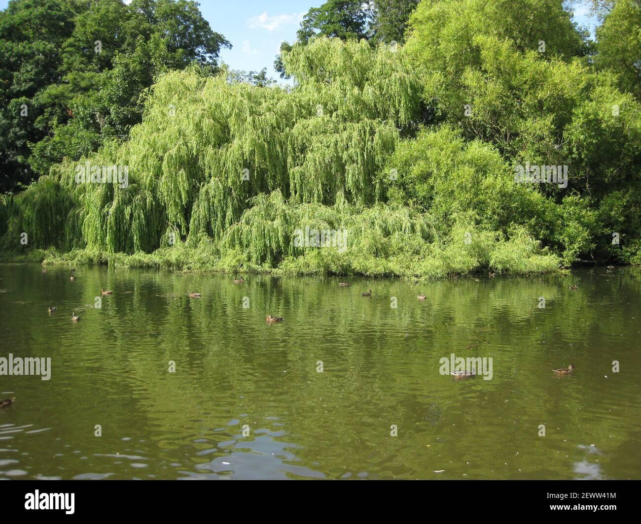 Vistas al lago de Thwaite Hall Gardens en Cottingham, East Yorkshire Foto de stock