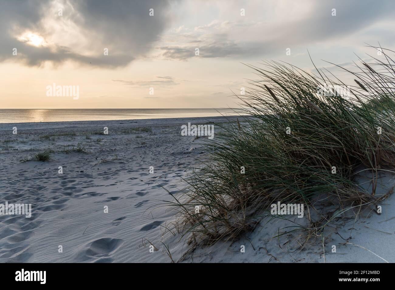 Dunas de arena de la playa de Blavand en Dinamarca con hierba seca Foto de stock