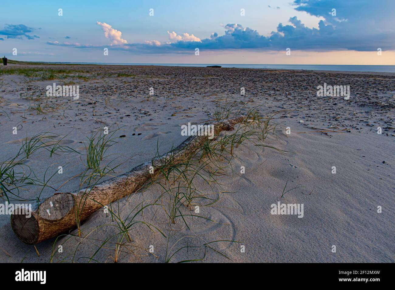 Antiguo registro en las dunas de arena de la playa de Blavand en Dinamarca Foto de stock