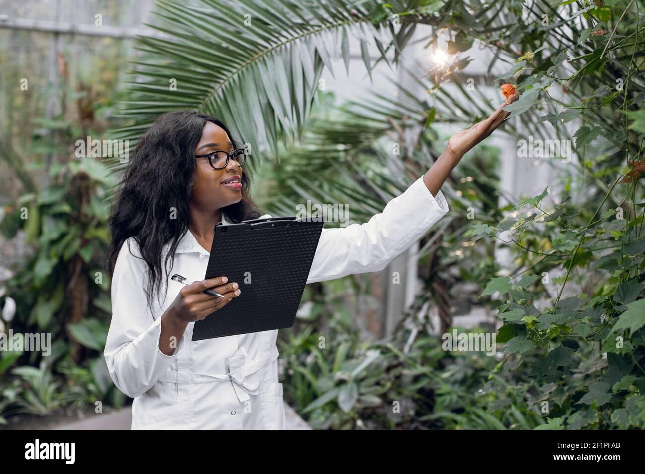 Una agrónomo profesional africana lleva a cabo la inspección de las plantas, trabajando en invernadero y toma notas en el portapapeles. Foto de stock
