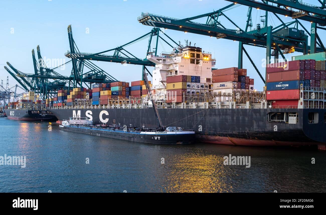Los contenedores se descargan del MSC Rachele en el Deurganckdok del puerto de Amberes Foto de stock
