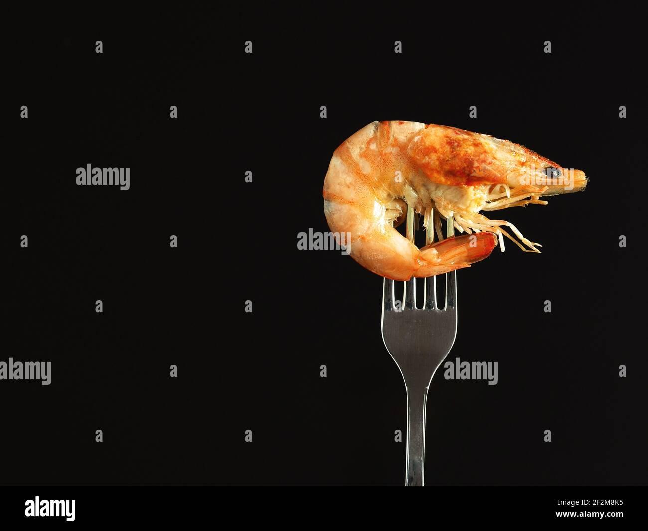 Camarón hervido real en un tenedor, aislado sobre fondo negro. Foto de stock