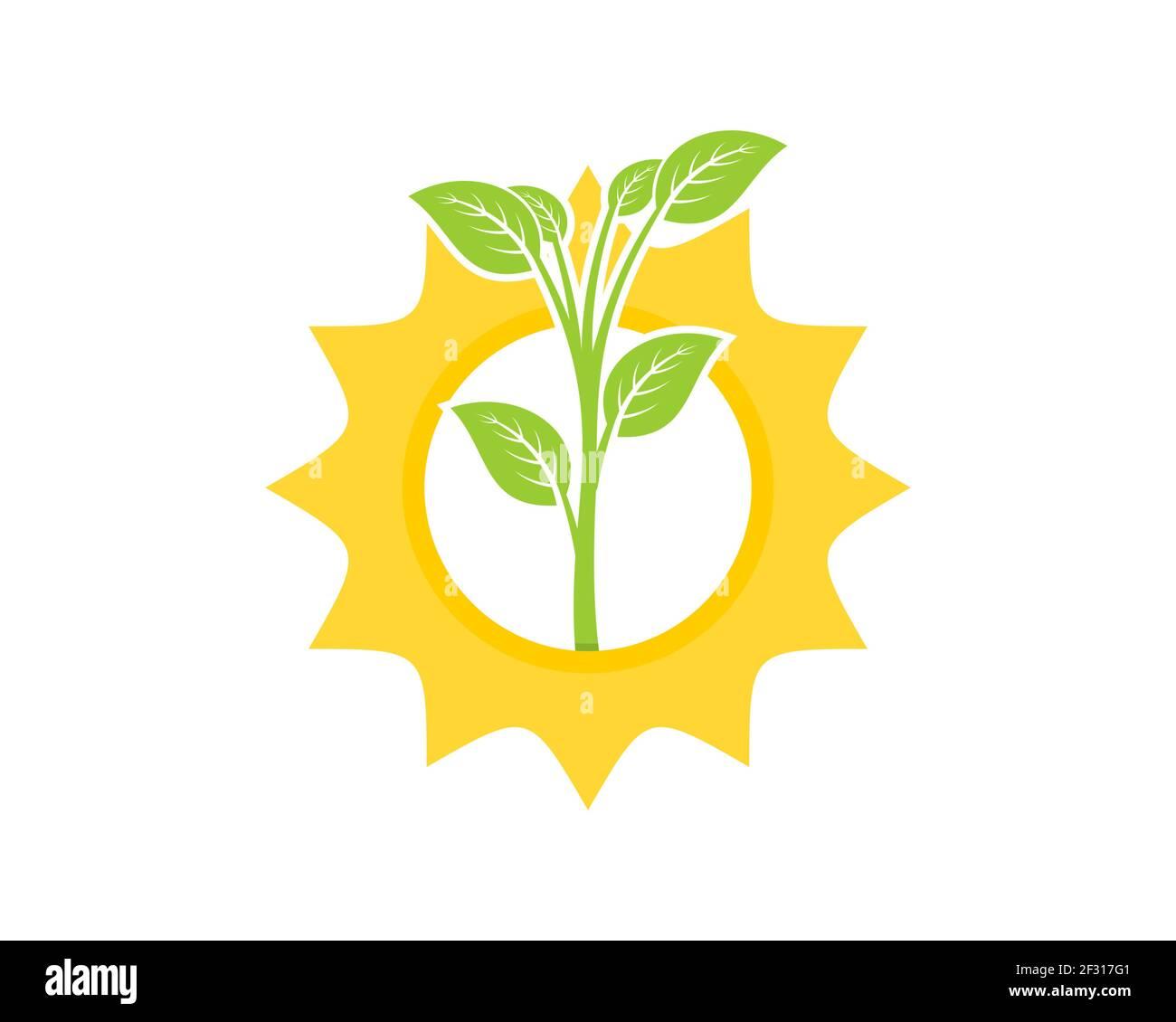 Plantando árbol en el logo del amanecer Foto de stock