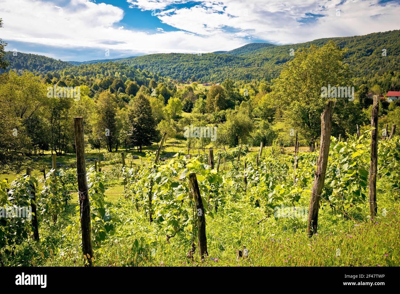 Viñedos y paisaje verde de la región montañosa de Gorski Kotar, en el centro de Croacia Foto de stock
