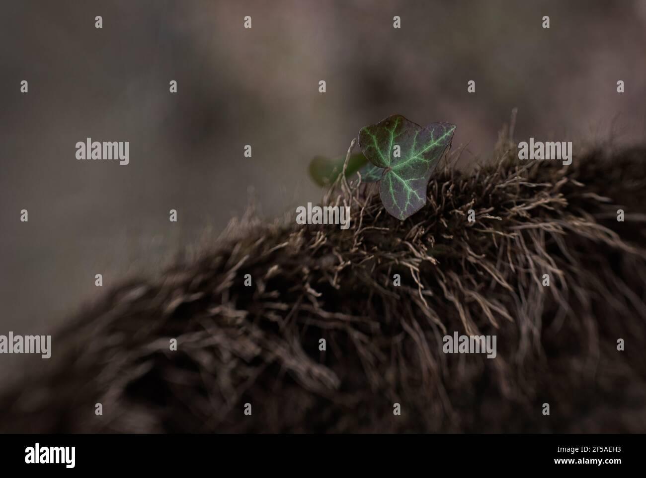 una sola hoja con un velo verde sobre un árbol con textura Foto de stock