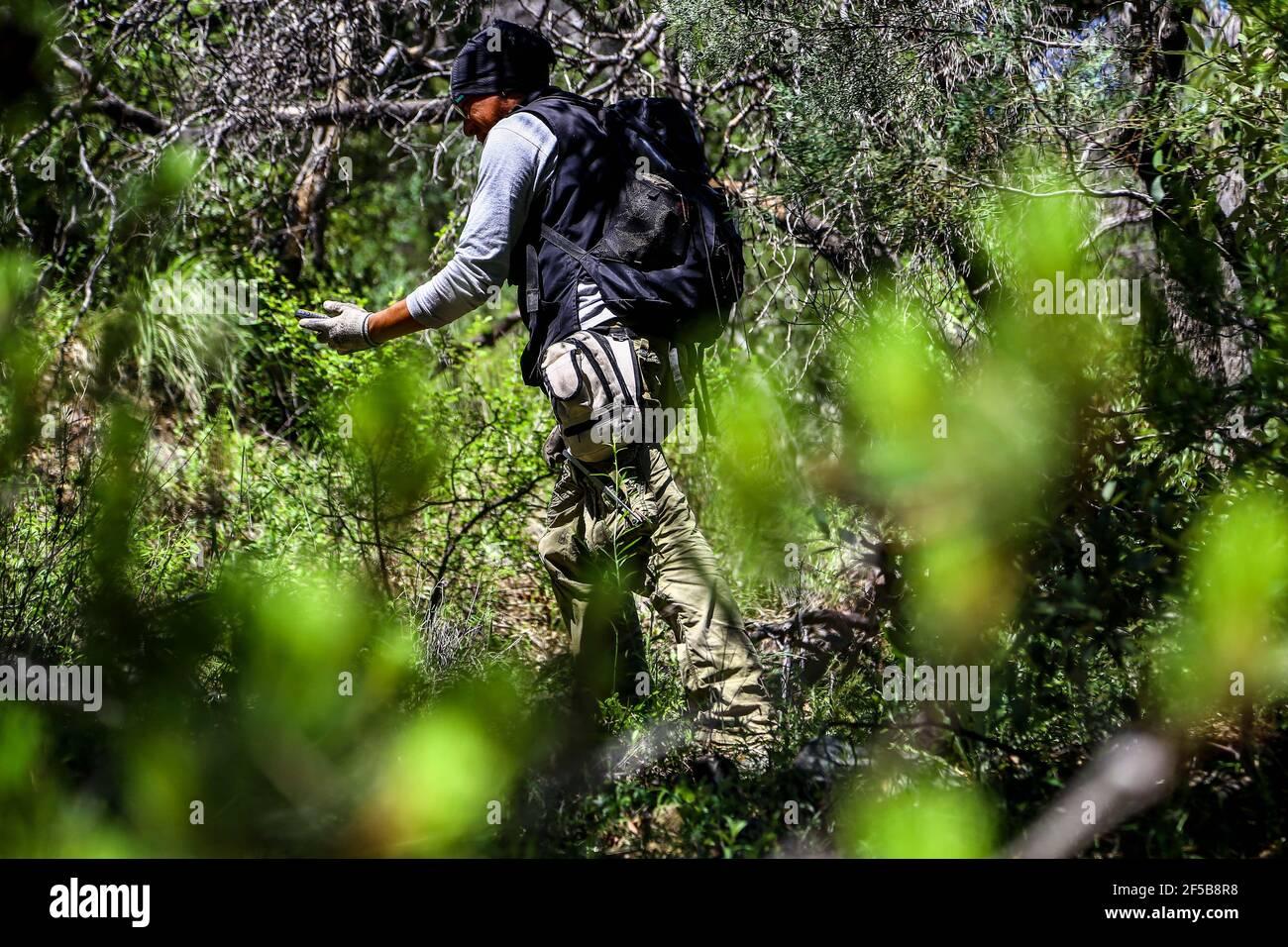 Diego Barrales especialista en Escorpiones. Veneno Madrean Diversity Expeditions con la Comisiòn Nacional de Areas Naturales protegidas, CONANP, en la Sierra del Tigre, municipio de Nacozari, Sonora. México. (CreditoFoto:LuisGutiérrez NortePhoto.com) Foto de stock