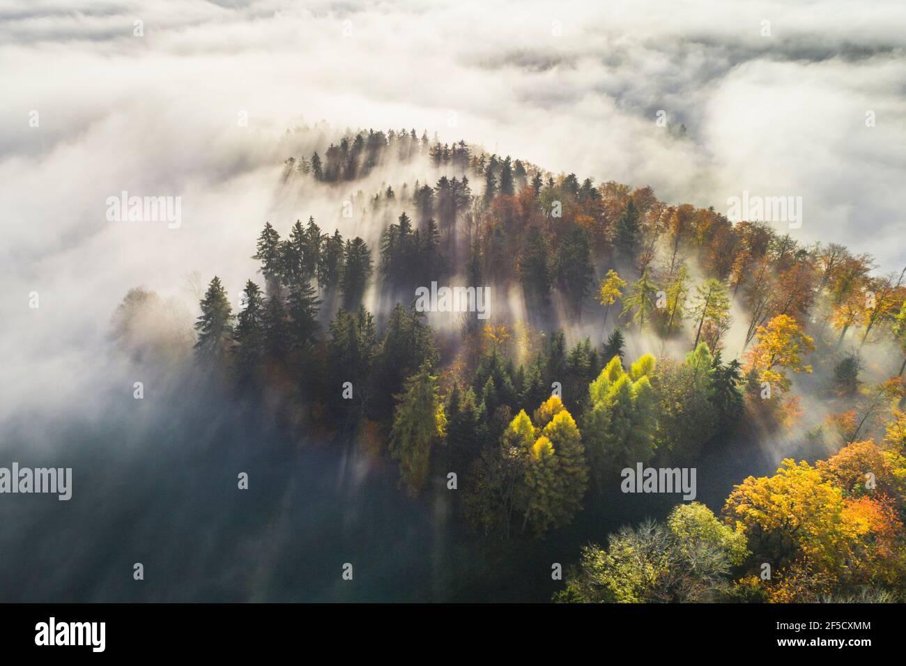 Geografía / viajes, Suiza, bosque con obleas de niebla, Zuercher Oberland (tierras altas de Zurich, Derechos adicionales-Clearance-Info-no-disponible Foto de stock