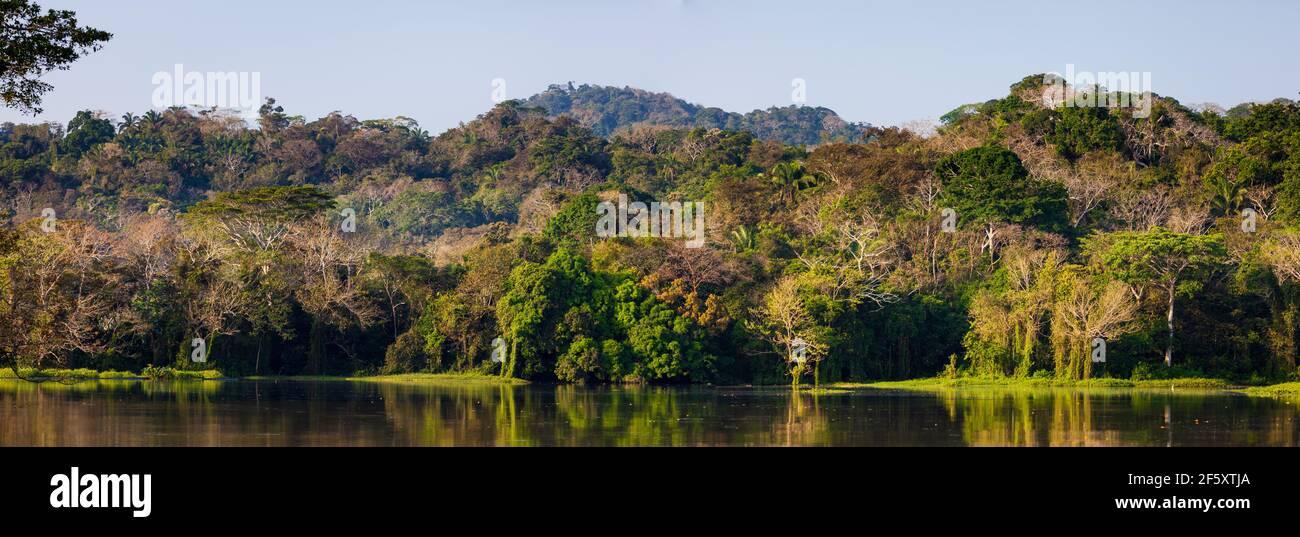 Hermosa selva tropical a primera hora de la mañana en uno de los brazos laterales en el lado oeste del lago Gatún y el Canal de Panamá, República de Panamá. Foto de stock