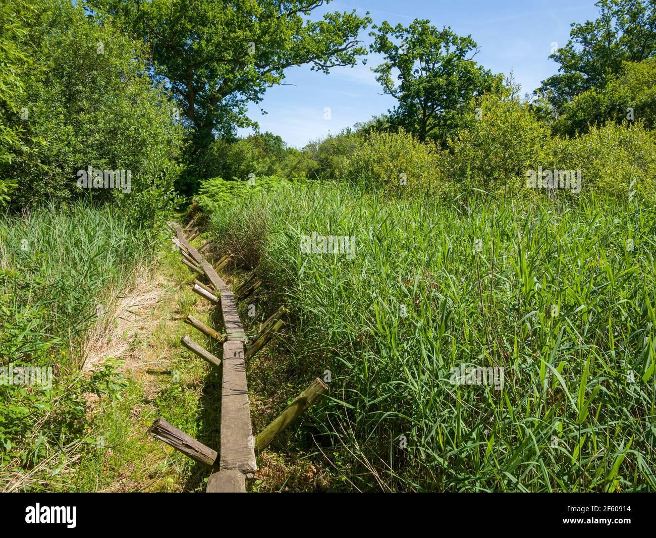 Una réplica del humedal Neolítico Sweet Track en la Reserva Natural Nacional de Shapwick Heath, parte de los Alguaciles Avalon en Somerset, Inglaterra. Foto de stock