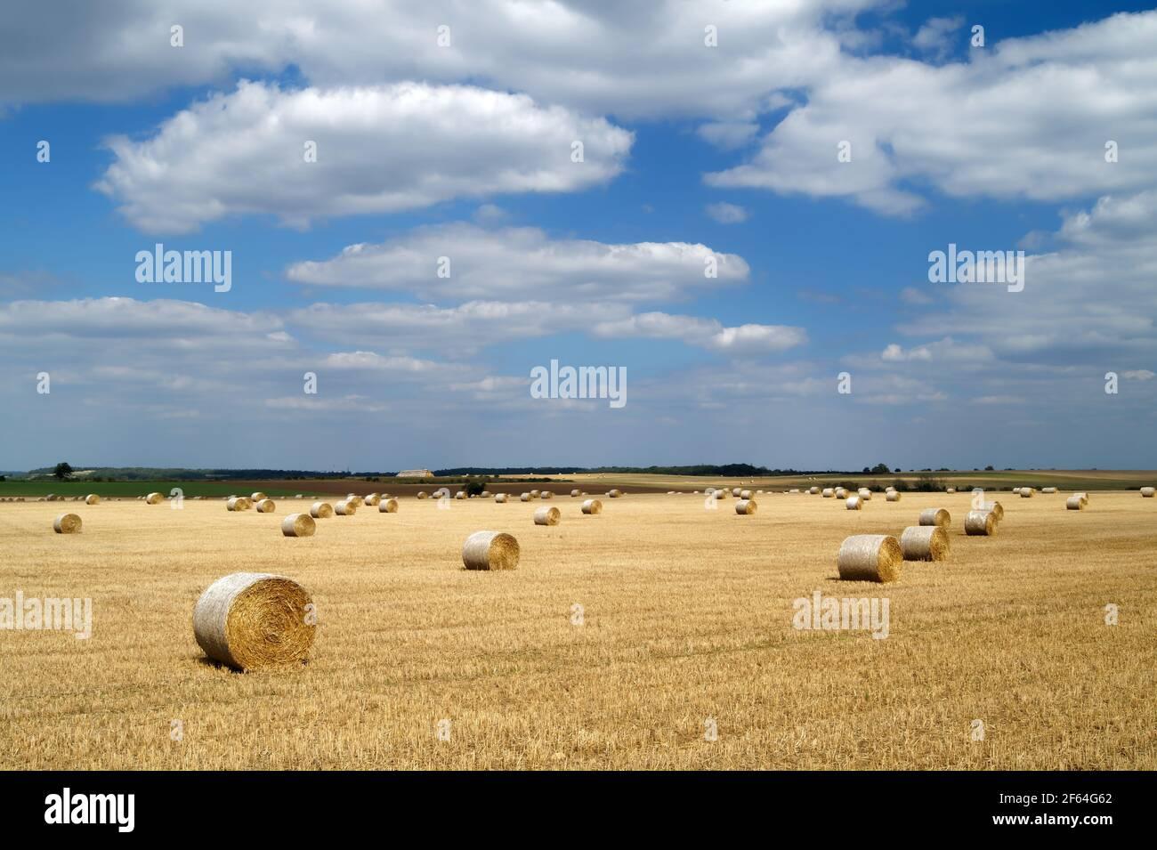 Reino Unido, Yorkshire del Sur, Doncaster, Drum Hay Bales en el campo cerca de Melton Alto Foto de stock