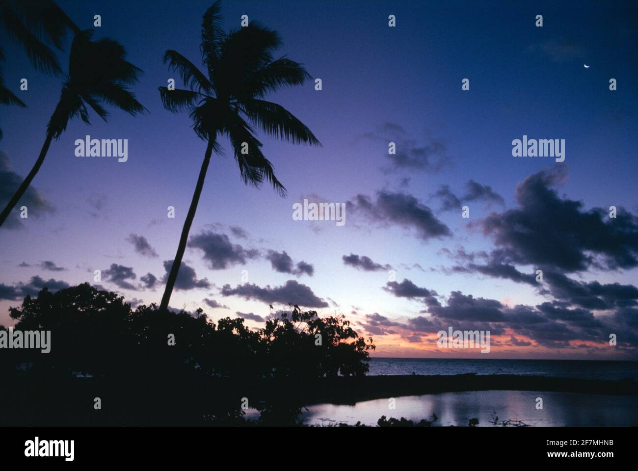 Polinesia Francesa. Islas Tuamotu. Costa de Rangiroa. Palmeras de coco al atardecer. Foto de stock