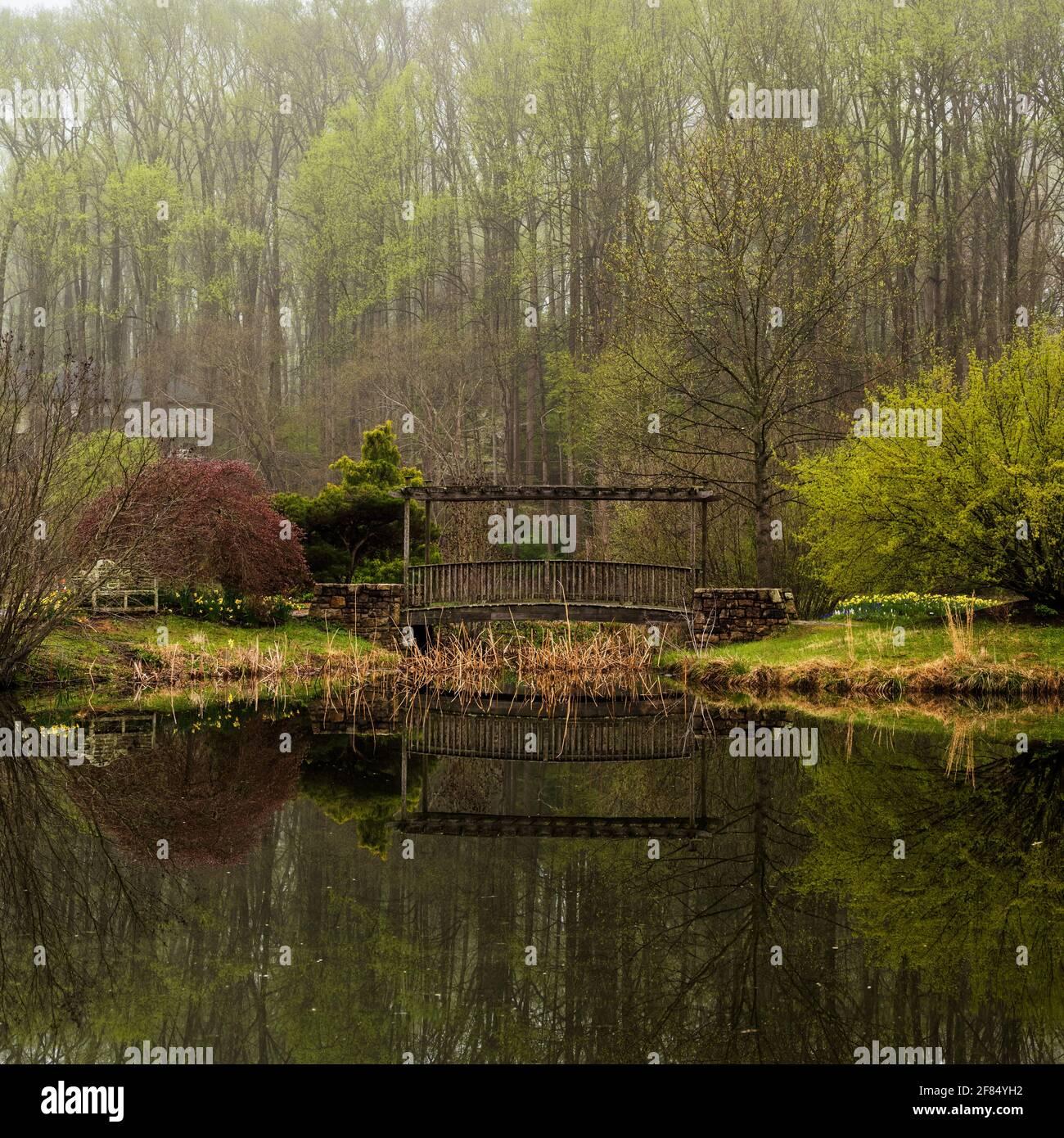 Una foto en formato cuadrado de un pequeño puente de madera sobre un estanque con árboles altos en el fondo en una mañana niebla. Foto de stock