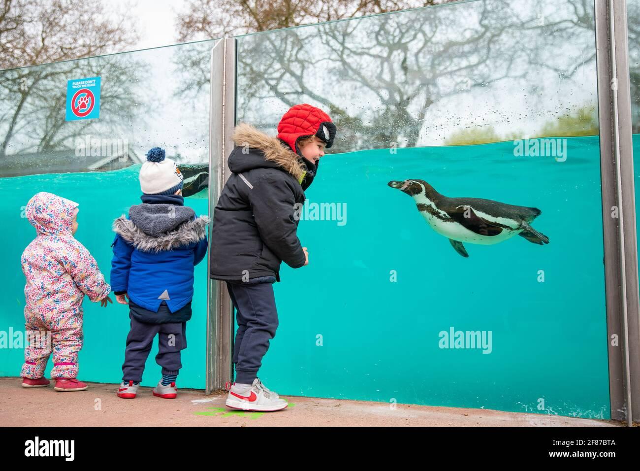 Los niños visitan a los pingüinos en el Zoo de Londres en Regent's Park, Londres, ya que Inglaterra da otro paso atrás hacia la normalidad con la mayor relajación de las restricciones de bloqueo. Fecha de la foto: Lunes 12 de abril de 2021. Foto de stock