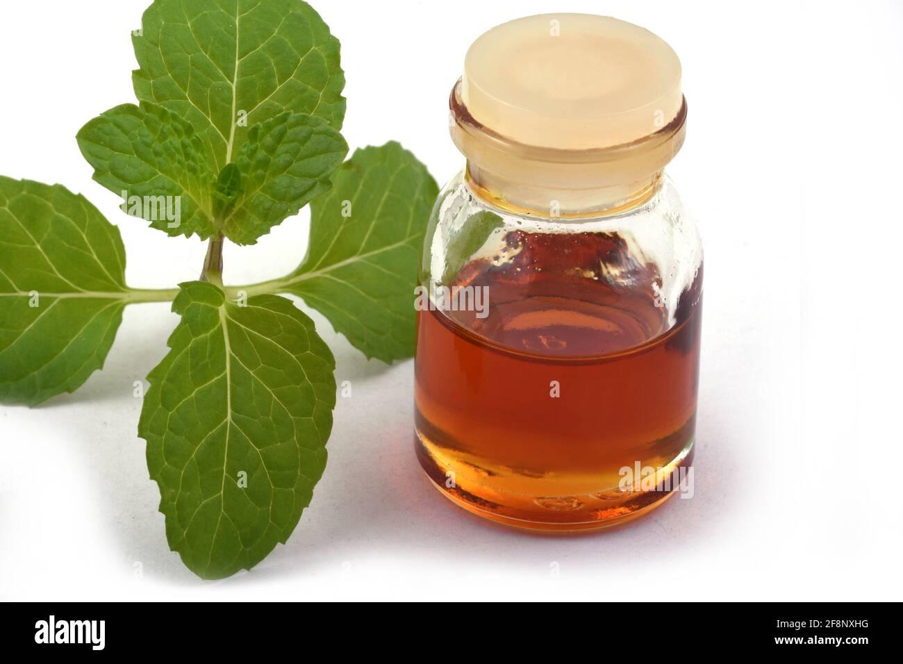 Aceite de menta esencial orgánico en un pequeño tarro de vidrio con hojas de menta verde, Salud y belleza, todavía vida spa concepto espacio de copia fondo Foto de stock